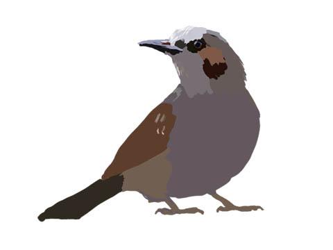 2008tokotowa-bird
